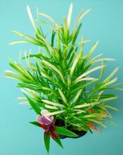 Decorate the fish tank for fake plants CS-0738 with good quality