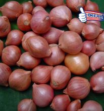 Latest Factory Supply!! onion specification fresh