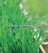 100% Natural Best quality /organic Young Barley Leaves Powder