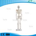 Xc-102 adultos modelo de esqueleto humano preço