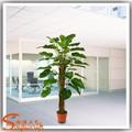 Tipos de artificial planta dracaena fragrans ornamentais de interior plantas de folhagem