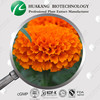 100% natural high quality 10% 20% Lutein Marigold Extract