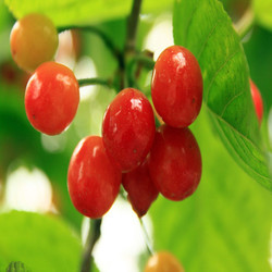 2015 Nature aroma gel freshener 425g canned cherry pits