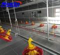 Pré-fabricados de aço de baixo custo avesdecapoeira galpão para frango