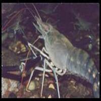 shrimp feed 50% protein feed animal feedstuff