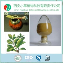 Direct Supply Yerba Mate Concentrate Extract High Quality in Bulk Stock