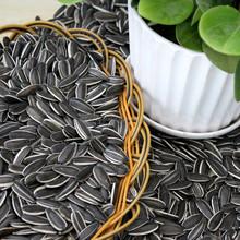 Black Sunflower Seeds New Crop long shape 5009/24/64