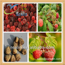 Raspberry extract Fructus Rubi P.E. Raspberry Powder Fructus Rubi Powder Bulk