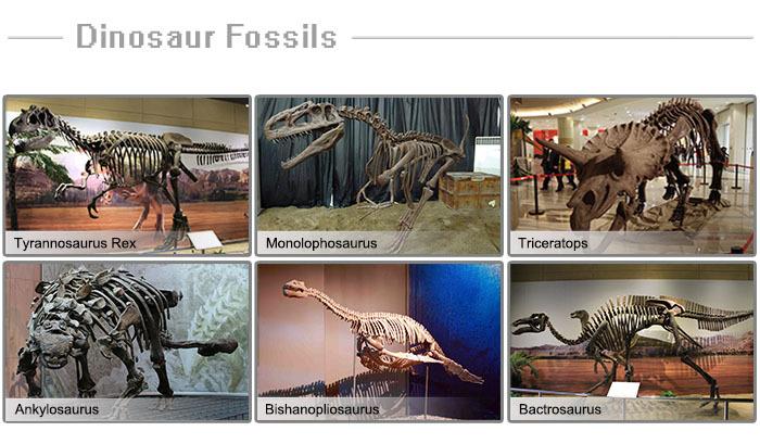 Simulative Dinosaur Dig Fossil Hunt Game
