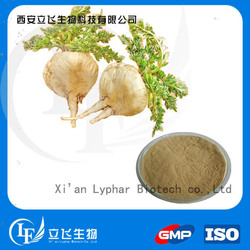Top Quality Natural Maca Extract
