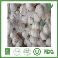 china fresh garlic best price