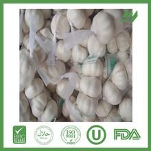 china fresh garlic best price