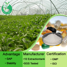 Organic Stevia leaf extract organic stevia