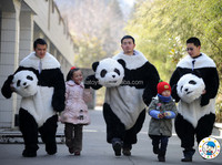 2015 Custom panda mascot head/cartoon head mascot