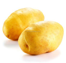China price of fresh potato for fresh vegetables importers in Egypt