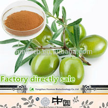 factory in bulk sale Natural organic olive leaf extract
