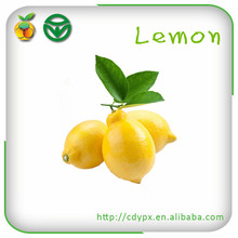 Yellow Fruits Fresh Lemon
