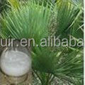 GMP factory Saw palmetto fruit extract