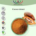 Ventas calientes del extracto de la hierba alta calidad 10% theobromine cacao harina