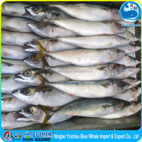 frozen pacific mackerel fish scomber japonicus products