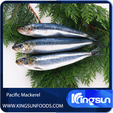Frozen Pacific Mackerel Prices
