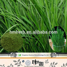 Produce Herbal extract drinking water soluble barley grass powder