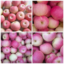 2015 New Fresh Gala Apple Price from Apple Factory