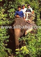 Safari 4 in 1 visit the forest and nature tour