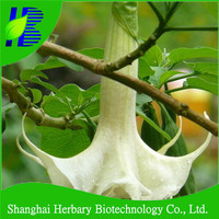 2015 High quality datura seeds for sowing