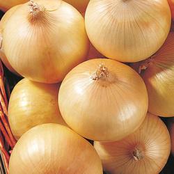 OKEYA Yellow Onion