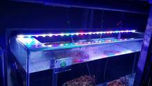 Fish - Aqua Grow Kit IP65 120cm 28x3watts Diodes LED Aquabar Lights Aquaponic Grow Freshwater Aquarium Plants