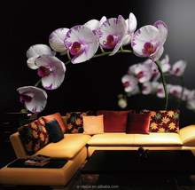 Orchid of PhotoWall, Orchid of wallmurals, Orchid of wallpapers in June, 2015