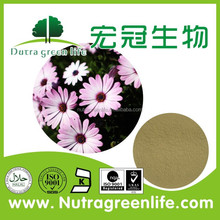 100% Pure Natural Polyphenol 4% Echinacea Purpurea Extract Manufacturer