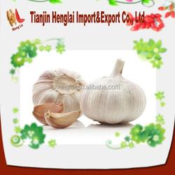 fresh white garlics for sale at good price