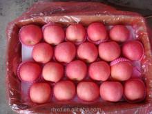 Apple Type and Pome Fruit Product Type organic Yan tai Fuji apple