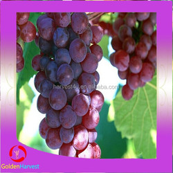 China peeled red sweet grape in syrup