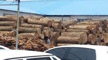 Best supply keruing / Gurjan logs for veneer mills