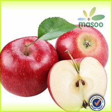 export fresh red delicious apple fruit fresh apple/fresh apple fruit for sale