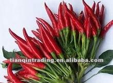 fresh red chilli seller