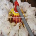 Novo Design melhor qualidade sistema de alimentação da galinha automática para frangos de corte e criador