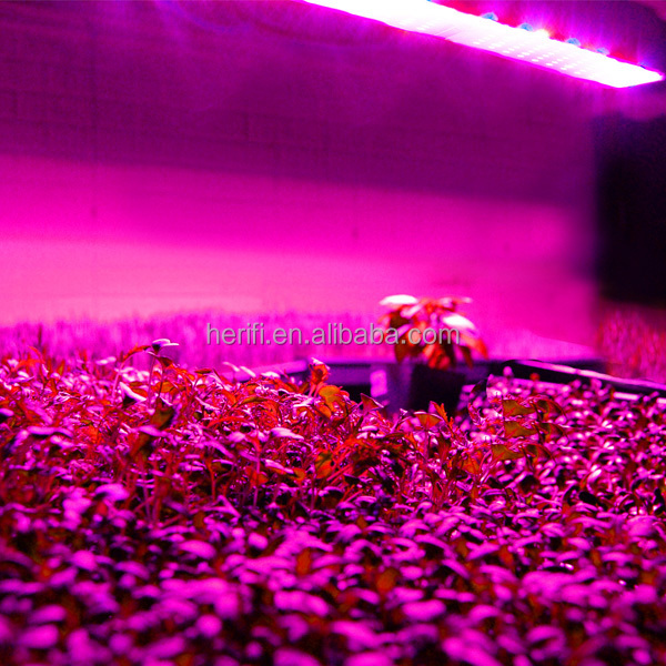 Herifi LED Grow Light 1.jpg