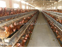 China sell good quality automatic Atype poultry battery chicken coop for broilers