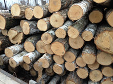 Birch logs, Birch round logs, Pine logs, Round timber