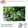 Houblon extrait de fleur de poudre/bière houblon huiles de fleurs/pure huile de fleur de houblon