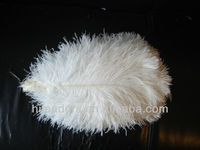 Natural ostrich feathers for picks