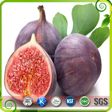 Chinese Herbal Extract Fig extract Health Food