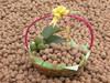 Chinese walnut , high quality thin skin walnut for sale