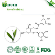 Pure Green Tea Extract/GMP Factory/100% Pure Extract/UV