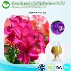 Top Quality Pelargonium Sidoides Root Extract ,Geranium extract powder