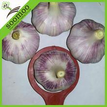 fresh style garlic health food